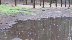 Stock Video Footage of Rain Puddle at the Campground