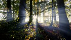Forest trees woods scenery. sunbeam light rays. silhouette backlight shadow Stock Footage