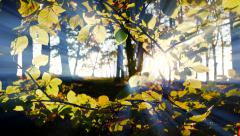 sunbeam light shining through forest trees. autumn fall nature background - stock footage