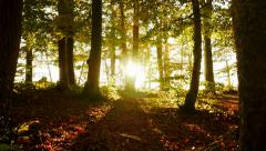 colorful forest trees in autumn fall season. woods nature background - stock footage