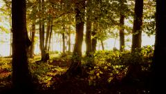 forest trees in autumn fall season. nature woods scenery background - stock footage