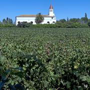 Wine industry in maipo valley, chile Stock Photos