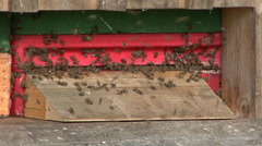 Beehive with many bees 01 Stock Footage