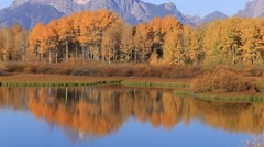 Oxbow Bend in Fall Stock Footage