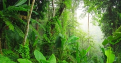 Dolly tracking video shot of green wilderness lush of tropical rainforest - stock footage