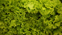 Chinese cabbage Stock Footage