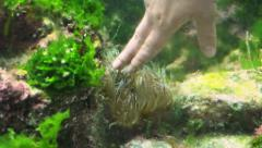 Green Anemone Touched By Human Hand Stock Footage