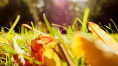 Autumn leaves lying on grass field. shallow background. fall season Stock Footage