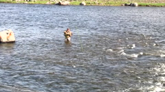 141125a man flyfishing in the river Stock Footage