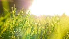 Green grass field background. farming harvesting ecology scene. vibrant vivid Stock Footage