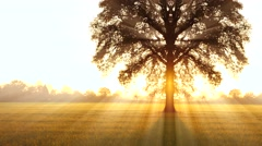 Tree of life background. sunbeam shining through. autumn fall season Stock Footage