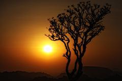Stock Photo of sunset tree silhouette