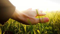 Hand moving over grass field flowers. magical vivid light. touching nature Stock Footage