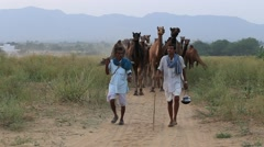 Indian men and a herd of camels in the desert. Pushkar, Rajasthan, India Stock Footage