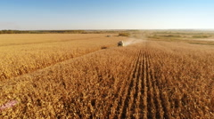 Harvester work on cornfield - stock footage