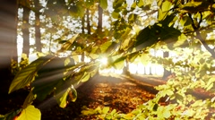 tree leaves branches. light beam effect. colorful nature. mystical background - stock footage