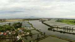 Aerial over Rice Fields Stock Footage