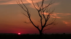 Lonely tree and   red sunrise . PAL Time lapse Arkistovideo