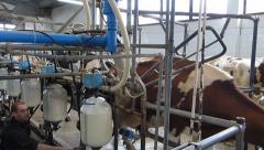 Milk in bottles on dairy farm Stock Footage