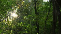 Sunbeams in green  wood. PAL Time lapse Stock Footage