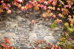 Walls are covered with ivy Stock Photos