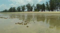 Stock Video Footage of Small crabs on the beach.