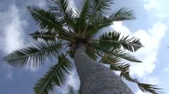 Kuredu beach palm tree Stock Footage