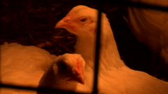 Close up of Chickens in pen Stock Footage