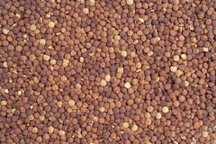 poured lentil - stock photo