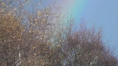 Rainbow through the trees - stock footage