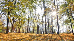 Sun beams through branches of trees in autumn park during a leaf fall - stock footage