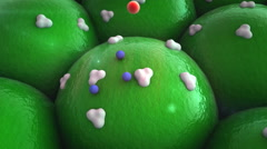 cell, receptors - stock footage