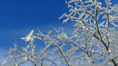 Stunning Snow Covered Trees Stock Footage