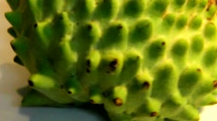 Green soursop  rotating in front of camera  - slow motion HD video Stock Footage