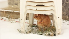 Rufous cat sitting under chair Stock Footage