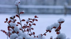 Snow Fall in New England Stock Footage