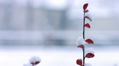 Snow Fall in New England - Single plant Stock Footage
