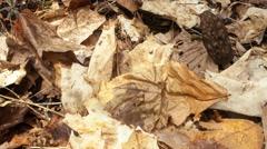 Morel Mushroom Motion Timelapse Stock Footage