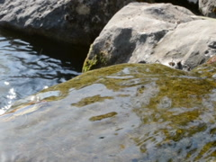 Mountain stream. Related clips are in my portfolio in 1920x1080. Stock Footage