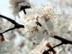 Stock Video Footage of Spring landscape. Related clips are in my portfolio in 1920x1080.