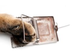 paw in mousetrap - stock photo