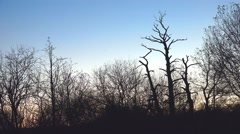 Winter evening skies with stark silhouette landscape of trees on horizon Stock Footage