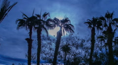 Moon Passing Palm Tree Row Timelapse Silhouette Arkistovideo