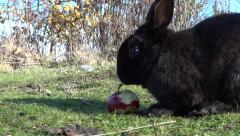 Wild Bunny Rabbits - 09 - Wood, Grass, Apple Stock Footage