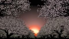 Moving through trees toward sunset Stock Footage