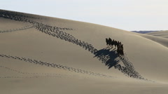 Camel Badain Jaran Desert Stock Footage