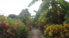 Banana garden path Stock Footage