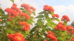 iridescence flowers - stock footage