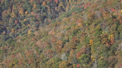 view of trees in fall colors on mountains from blue ridge parkway, nc - stock footage