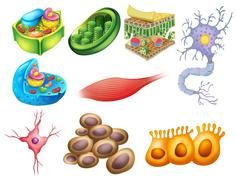 Different biology cells - stock illustration
